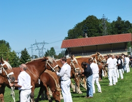 concours-national-cheval-comtois