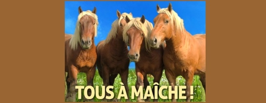 Concours National Cheval Comtois